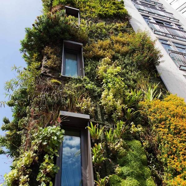 Vertikaler-Garten-Hauswand