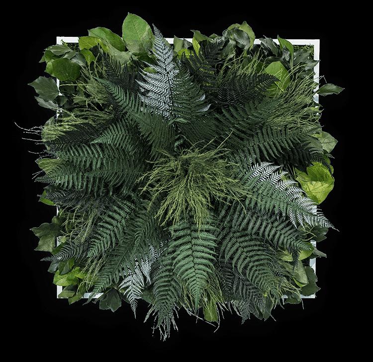 dschungelbild 55 x 55 cm aus pflanzen ohne pflege stylegreen. Black Bedroom Furniture Sets. Home Design Ideas
