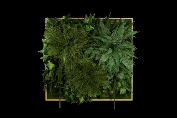 Soundbild: Dschungel-Soundbild 80x76cm mit Akku