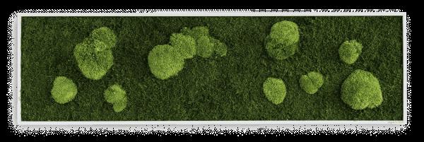 Wald- und Kugelmoosbild 140x40