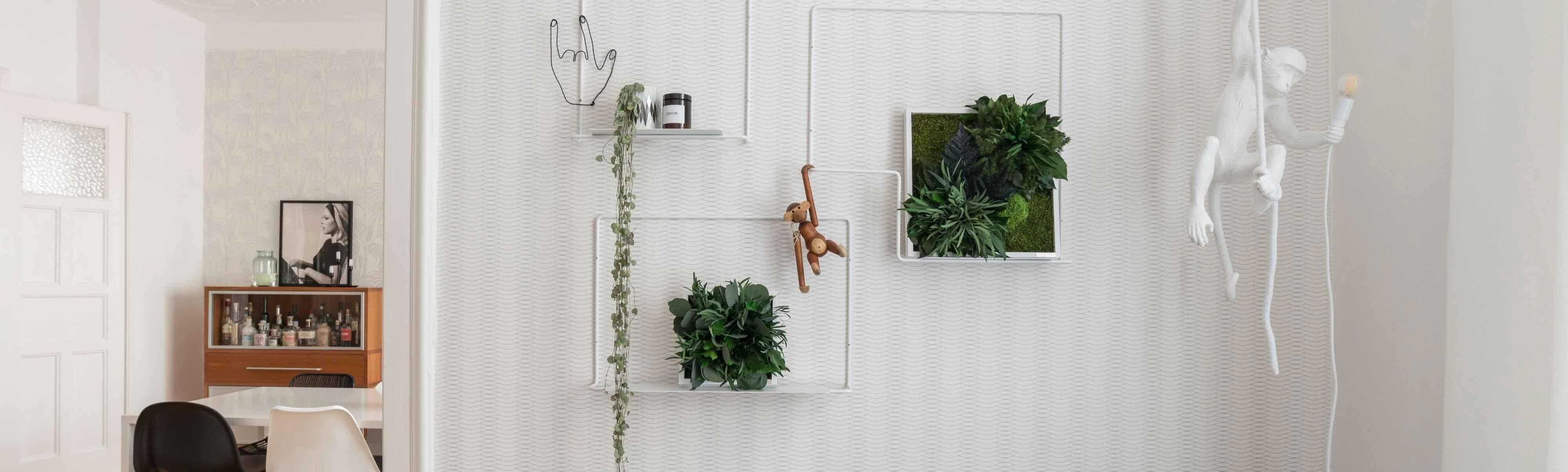 ambiente-pflanzenbilder