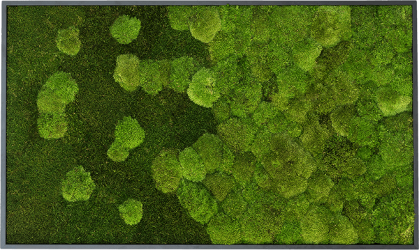 Moss picture merge: Pole and forest moss picture merge 100x60