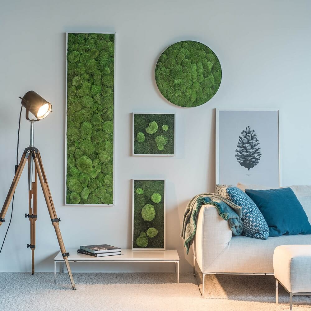 maintenance free moss pictures and plant pictures stylegreen english rh stylegreen de
