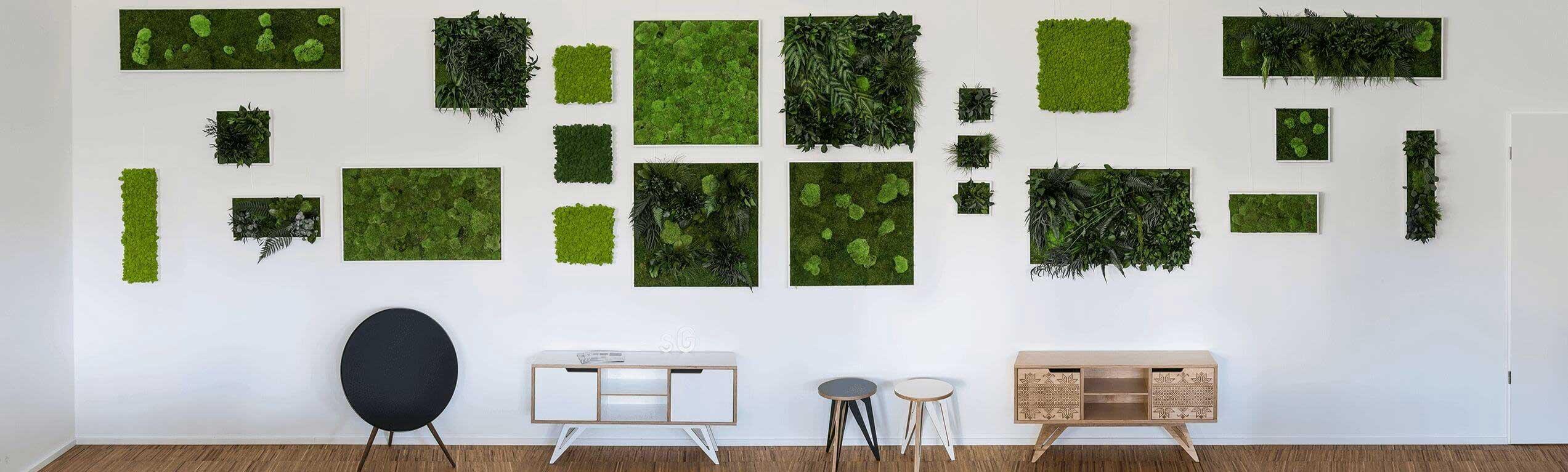 Moosbilder-Pflanzenbilder-Showroomwand-kleinS7wr18JWJFApW