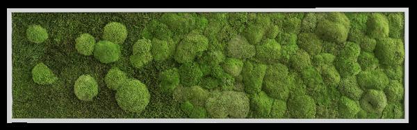 Wald- und Kugelmoosbild Verlauf 140x40 frontal