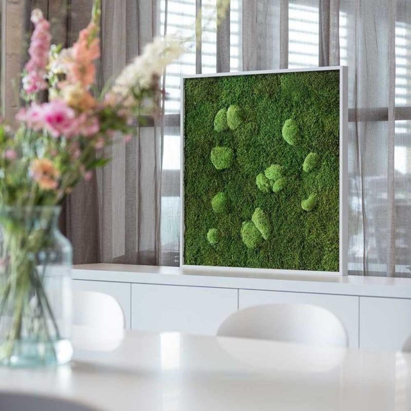 Moosbilder Und Pflanzenbilder Ohne Pflege Stylegreen