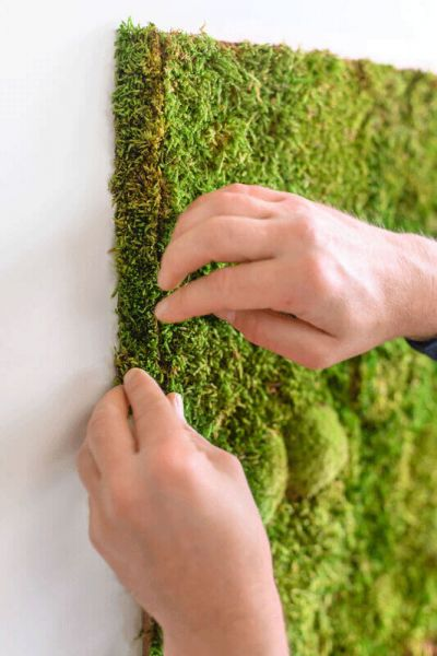 flexGREEN edge greening forest moss small