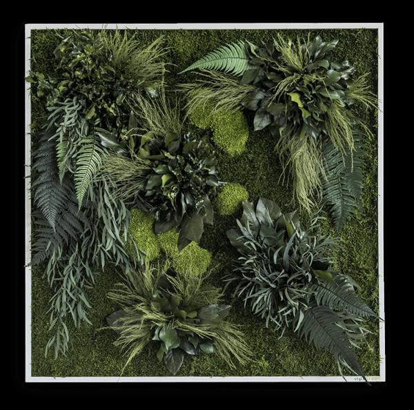 Pflanzeninselbild 80x80
