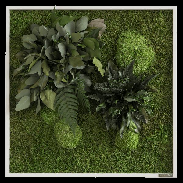 Pflanzeninselbild 55x55 frontal
