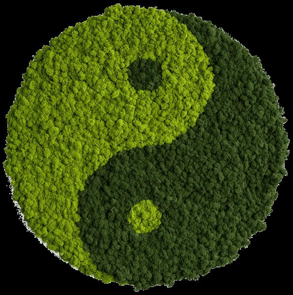 Islandmoosbild Yin und Yang