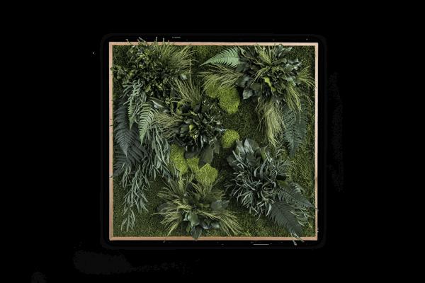 Soundbild: Pflanzeninsel-Soundbild 80x76cm mit Akku