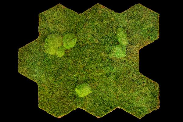 Reindeer moss flexGREEN 75x55cm (2 panels)