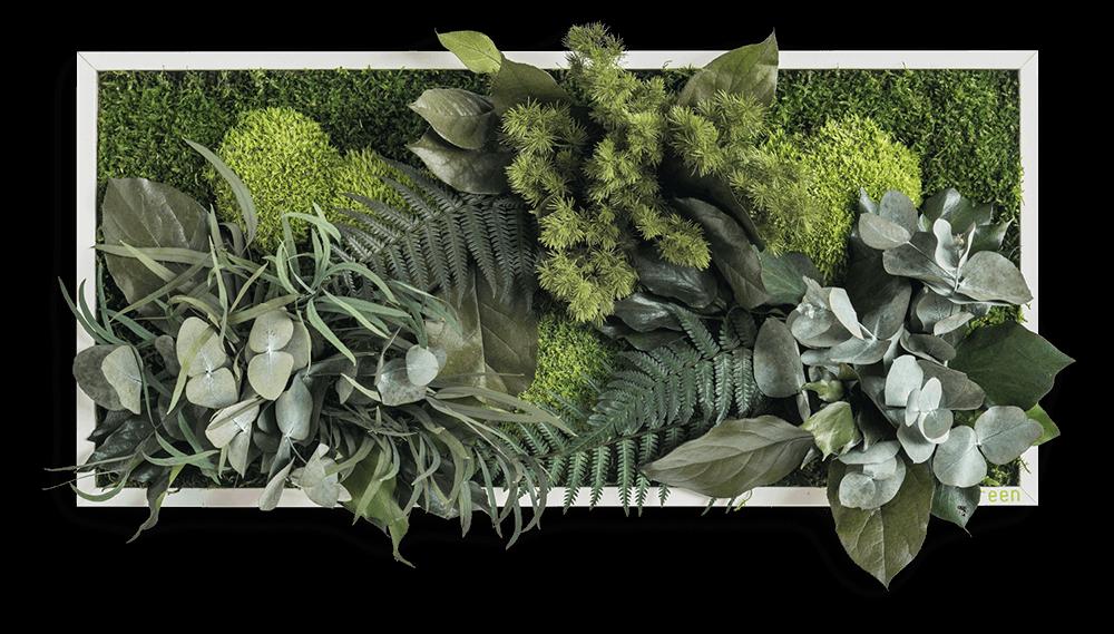 pflanzenbild 27x57cm ohne pflege vom hersteller stylegreen. Black Bedroom Furniture Sets. Home Design Ideas