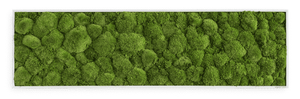 Moss picture: Pole moss picture 140x40