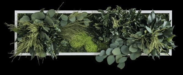 Pflanzeninselbild 70x20