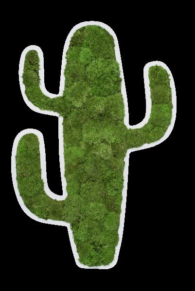 Piktogramm: Kaktus 80 cm Kugelmoos