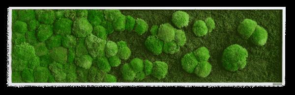 Moosbild Verlauf: Wald- und Kugelmoosbild Verlauf 140x40cm
