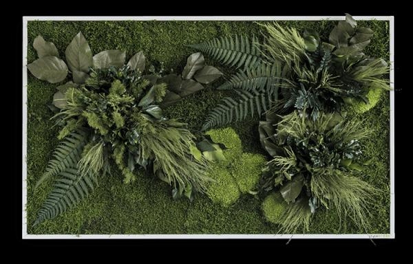Pflanzeninselbild 100x60