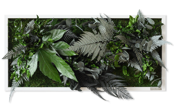 plant pictures with jungle design 57x27cm solid wood frame (white)