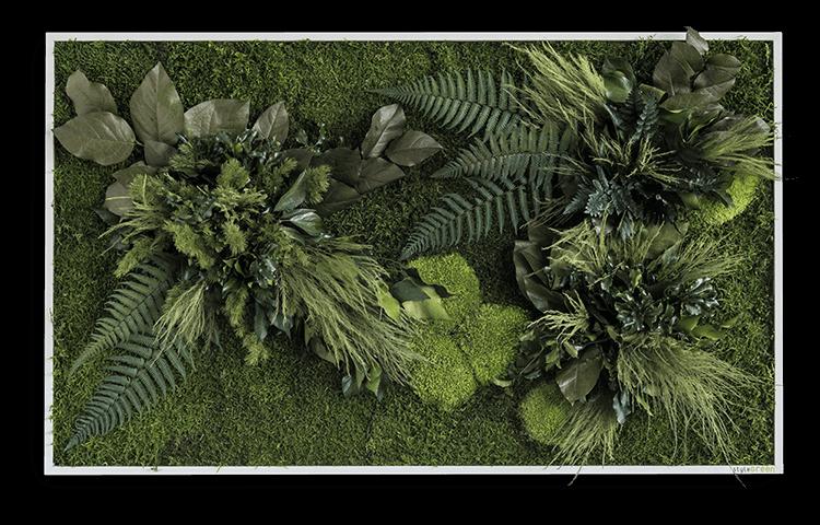 echtes pflanzenbild 100 x 60cm vom hersteller kaufen stylegreen. Black Bedroom Furniture Sets. Home Design Ideas