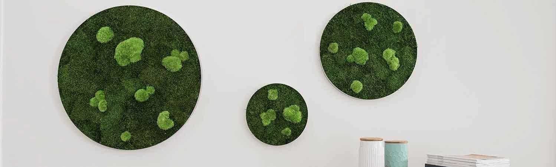 Wald-und-Kugelmoosbild-Kreis-Set-Ambiente6-klein