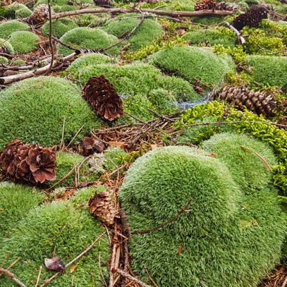 This Is How Our Moss And Plant Pictures Are Created Stylegreen