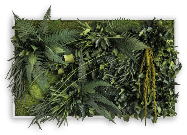 Dschungelbild 100x60 frontal